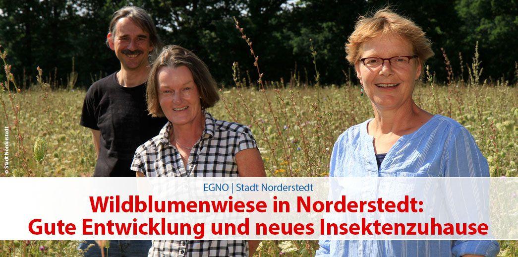 Wildblumenwiese in Norderstedt: Gute Entwicklung und neues Insektenzuhause